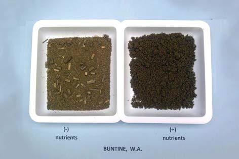 Opbygning af humus i jorden
