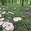 Thumbnail: Blanc de semis de Coulemelle biologique AB
