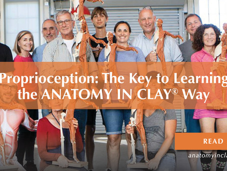 Proprioception: The Key to Learning the ANATOMY IN CLAY® Way