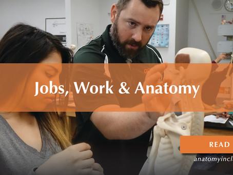 Jobs, Work & Anatomy