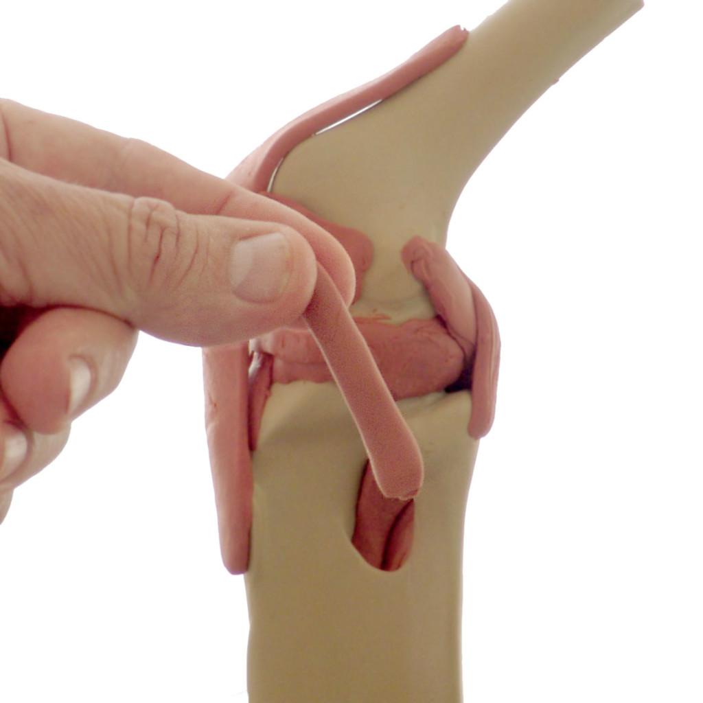 MidiMANIKEN™ Knee