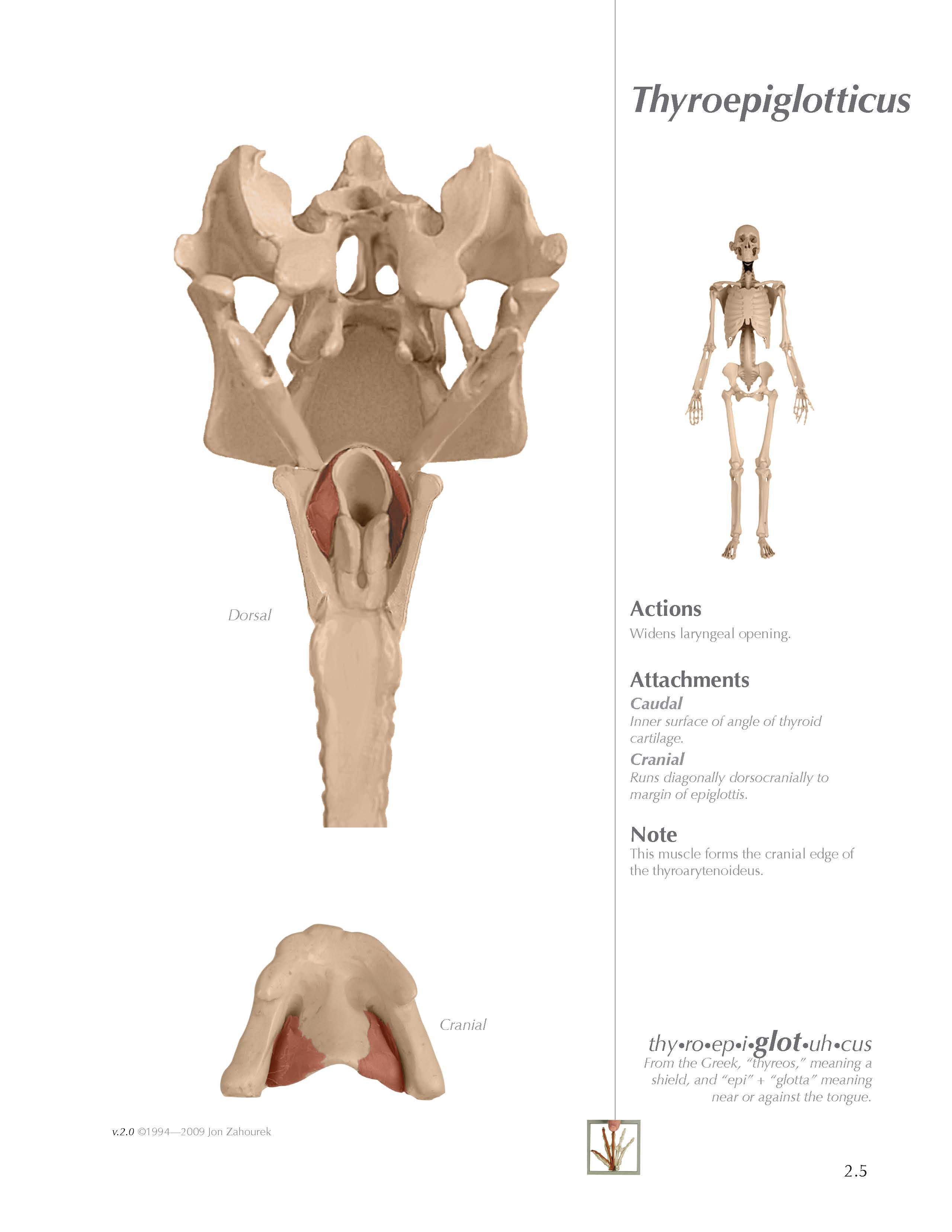 MYOLOGIK® Human Atlas - Volume Two