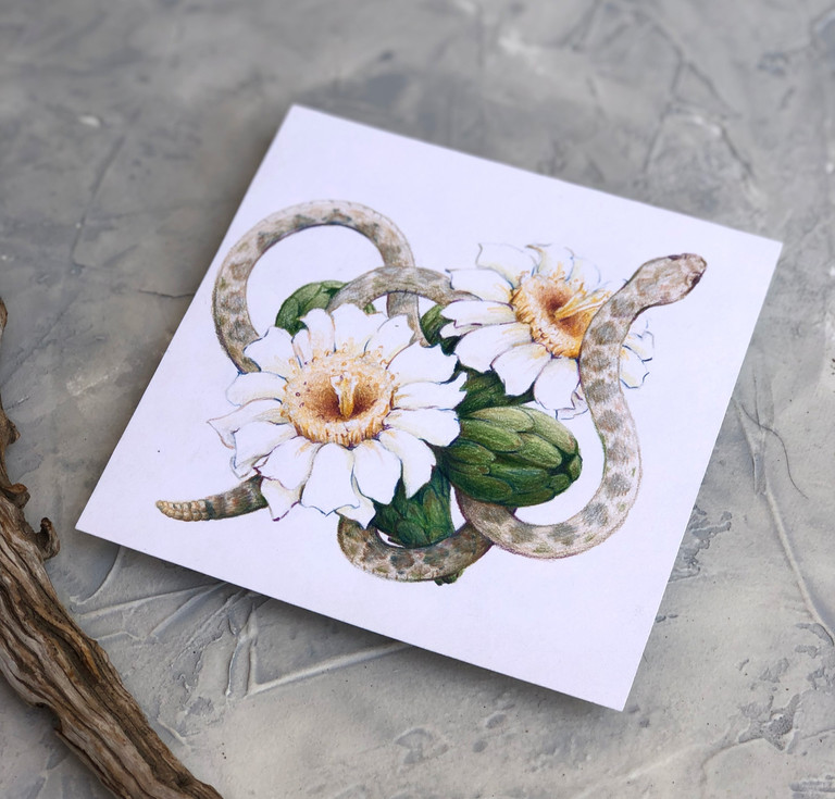 Saguaro blossom and Rattlesnake