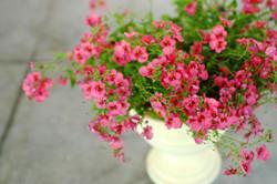 Pink Plant maceta