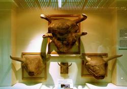 Çatal höyük (Ankara Museum)