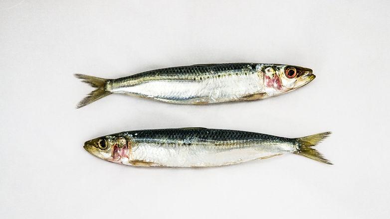 BBI Sardines