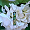 Thumbnail: Resilience 274 - Hand Painted Glass Jewelry Pendant and Necklace