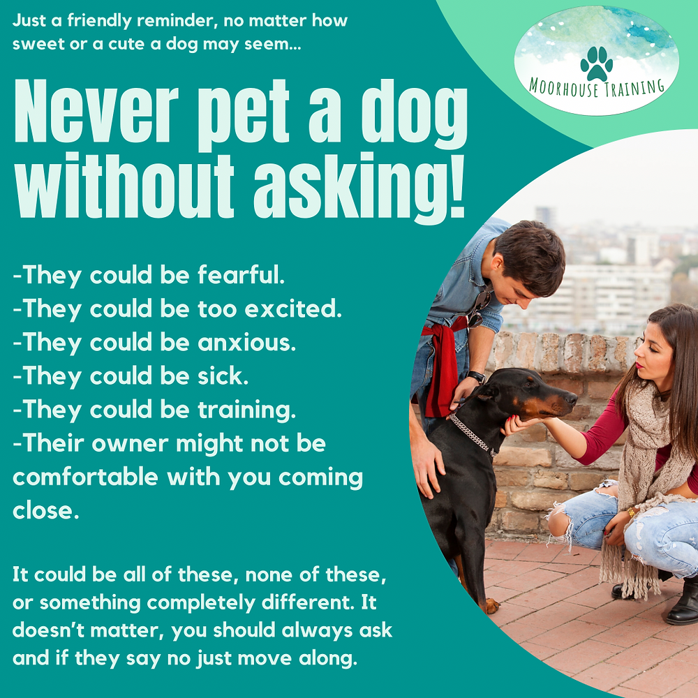 Never pet a dog without asking