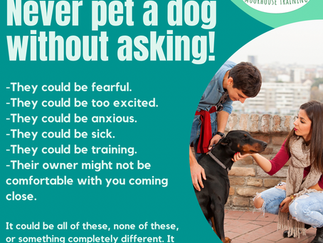 A Friendly reminder, you should never pet a dog without asking for permission.