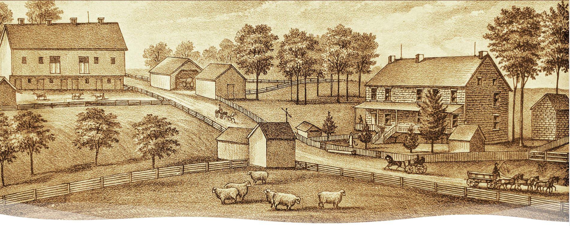 Belfast Farm