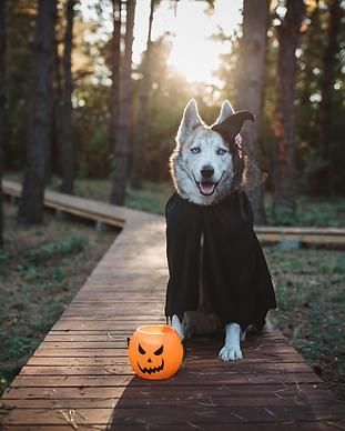 halloween online dog show