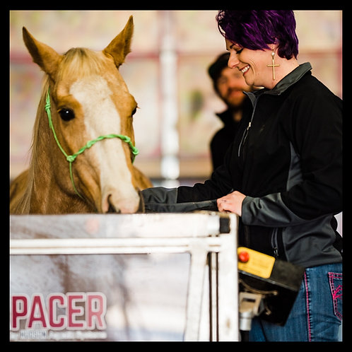 Certified Equine Rehab Therapist