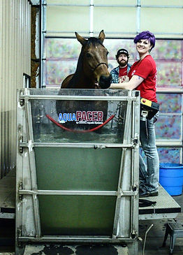 Equine Therapy In An AquaPacer Salt Spa