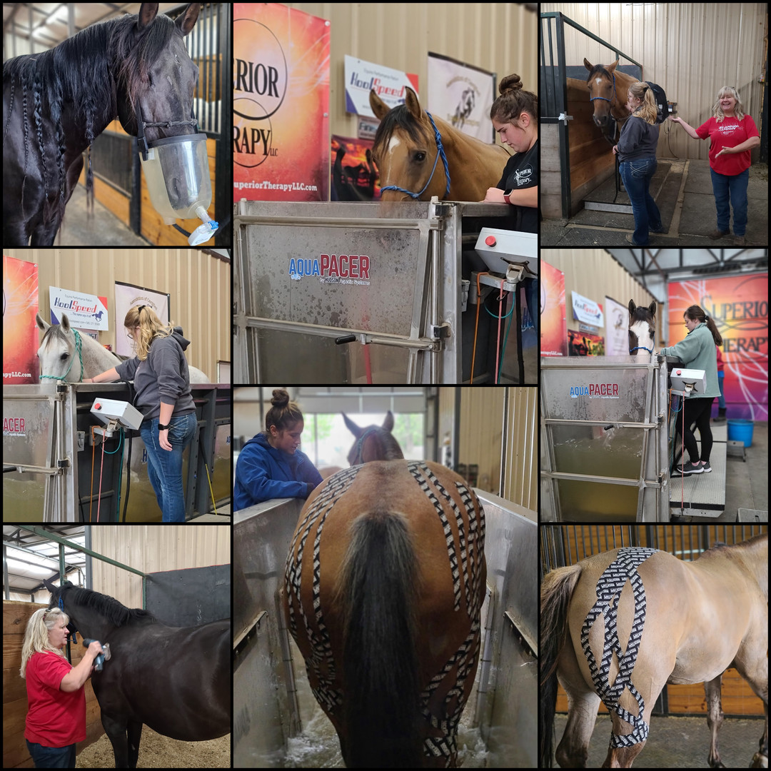 Equi-Resp and Kinesiology Tape at Superi
