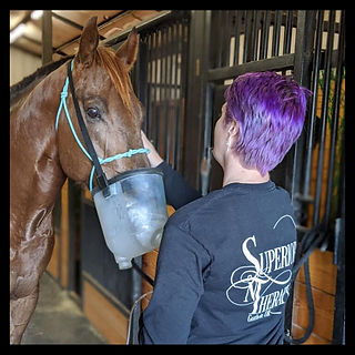 Association Of Certified Equine Therapies Certified Equine Respiratory Therapist By Equi Resp