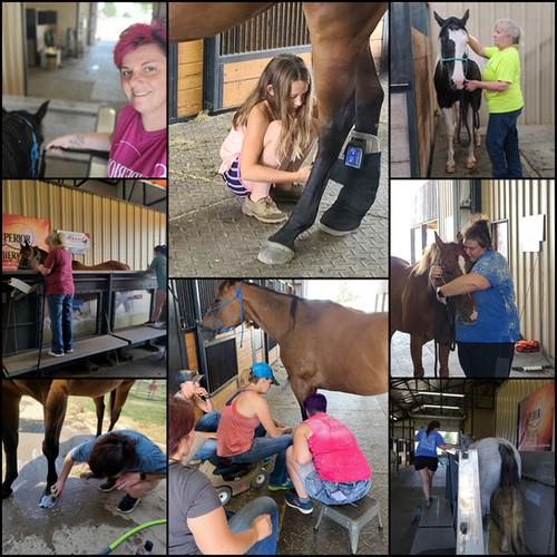 Superior Therapy LLC Equine Rehab