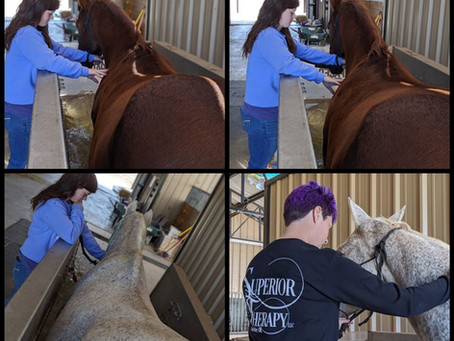 Let's Talk... Handling a Horse in the Aquatred