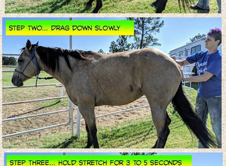 Pelvis Stretches for Performance Horses
