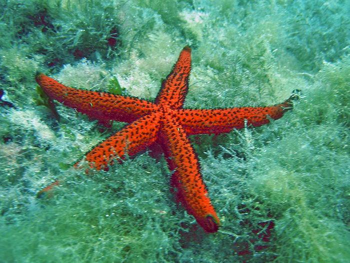 Tabarka Tauchparadies im Mittelmeer 19