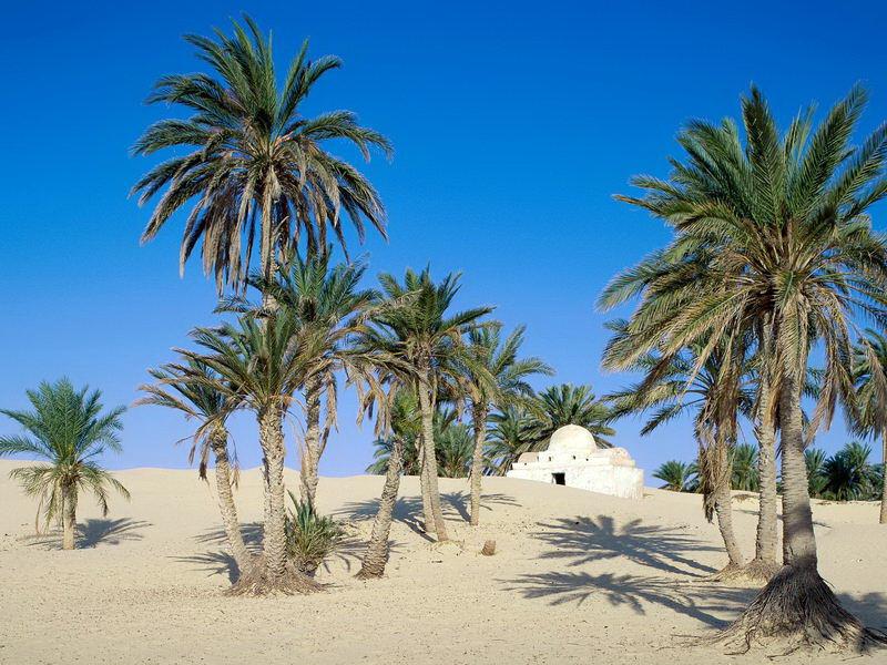 Near Douz, Sahara Desert, Tunisia_Bildgröße ändern