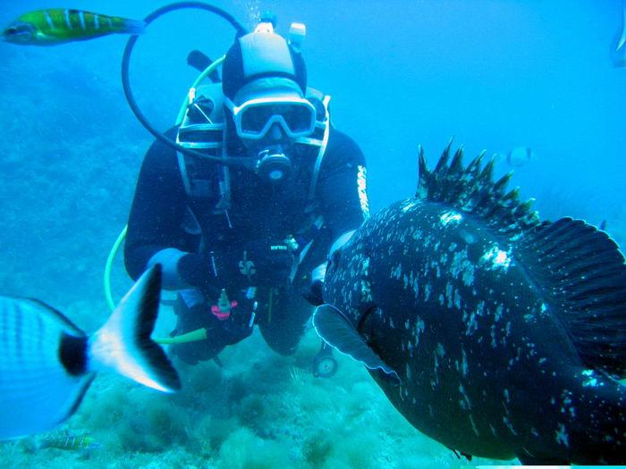 Tabarka Tauchparadies im Mittelmeer 10