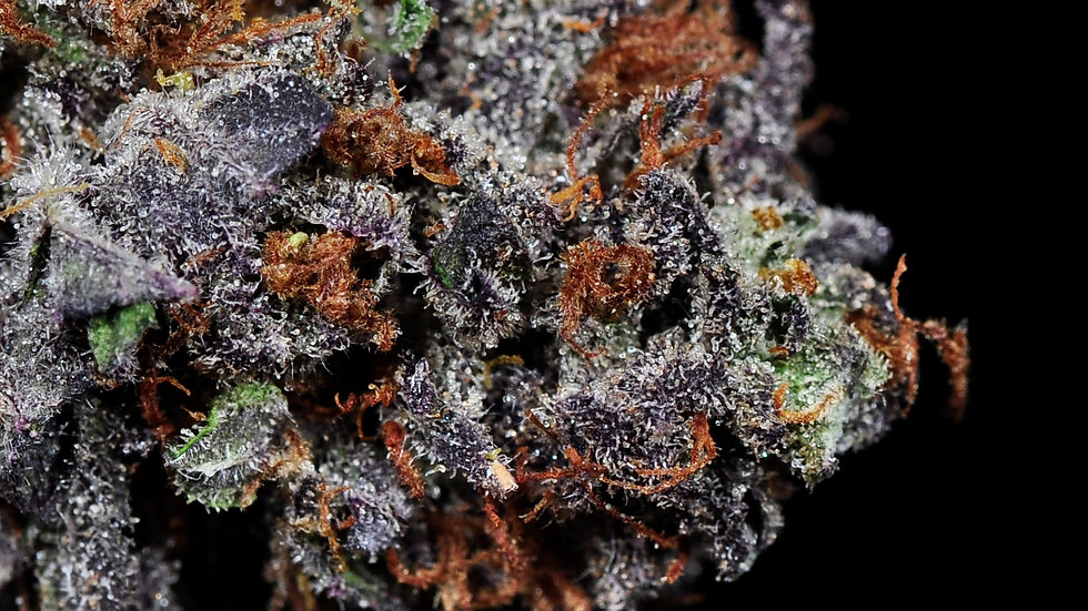 The Purps