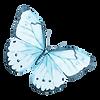 Acquerello Farfalla 12