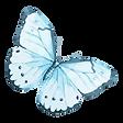 Akvarel motýl 12
