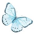 Aquarell-Schmetterling 12