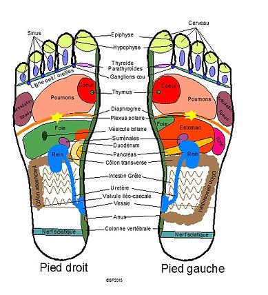 cartographie  des pieds
