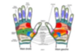 cartographie des mains
