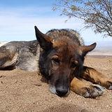 dogs32210 (7).jpg