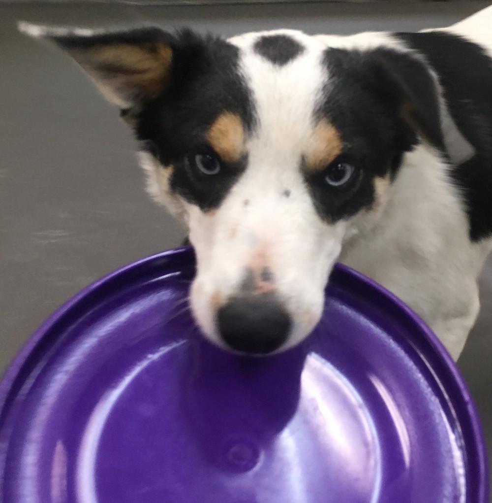 frisbee dog tucson