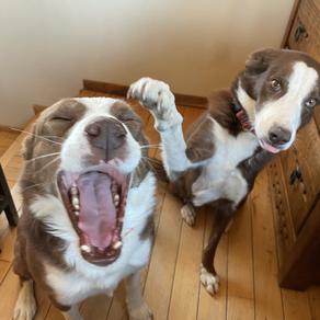 Teach Your Dog Touch