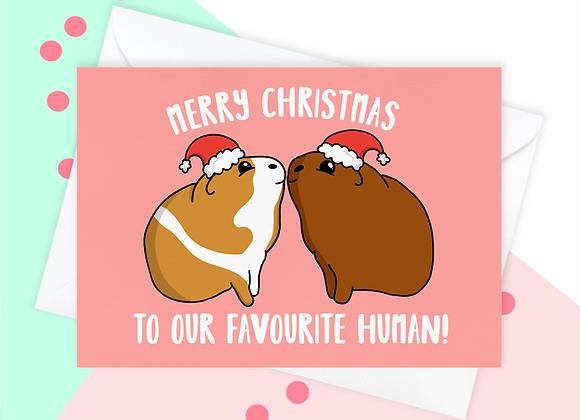 Christmas Card From The Guinea Pig, Guinea Pig Christmas Card