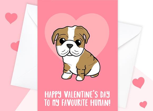 English bulldog valentines card, valentines card from the English bulldog