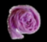 IMG_7456_edited_edited_edited.png