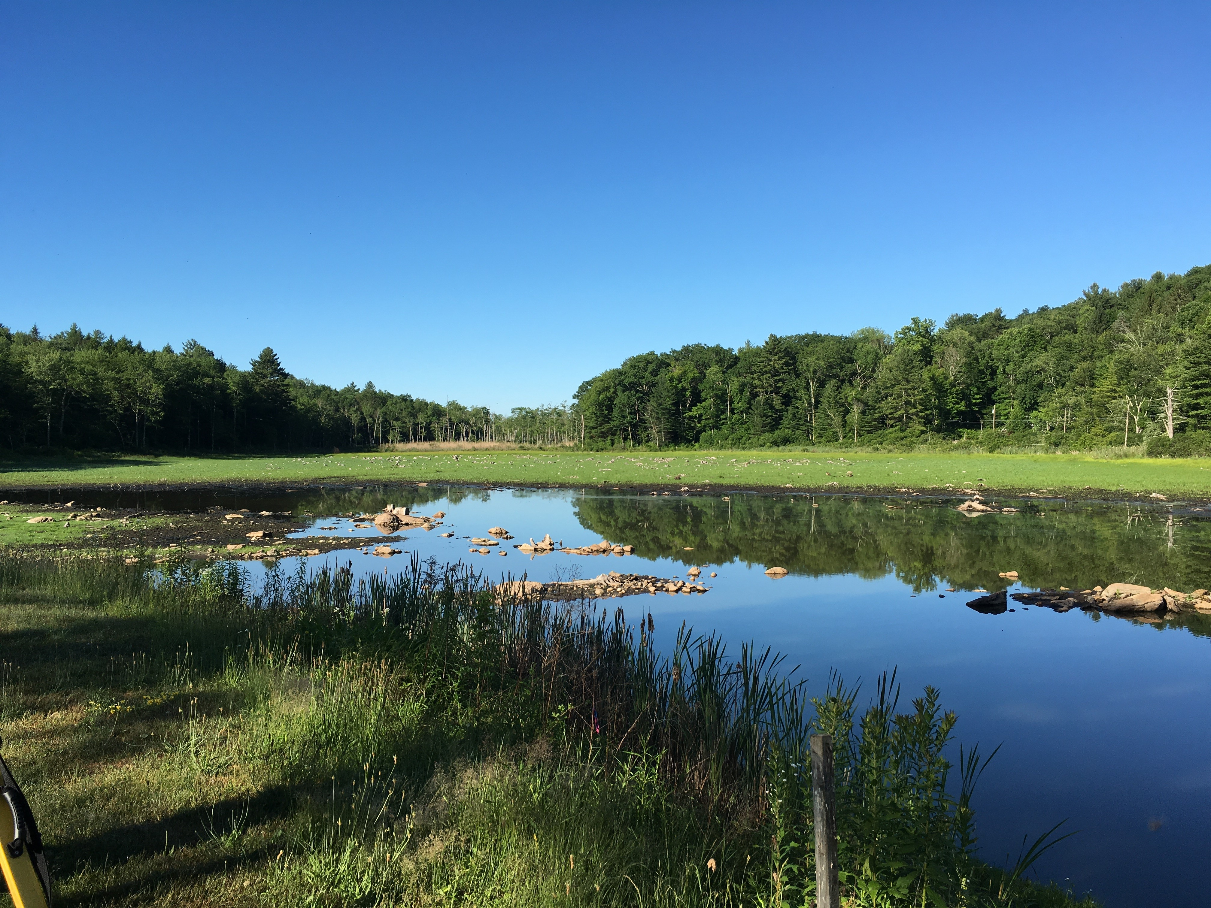 Nash Pond