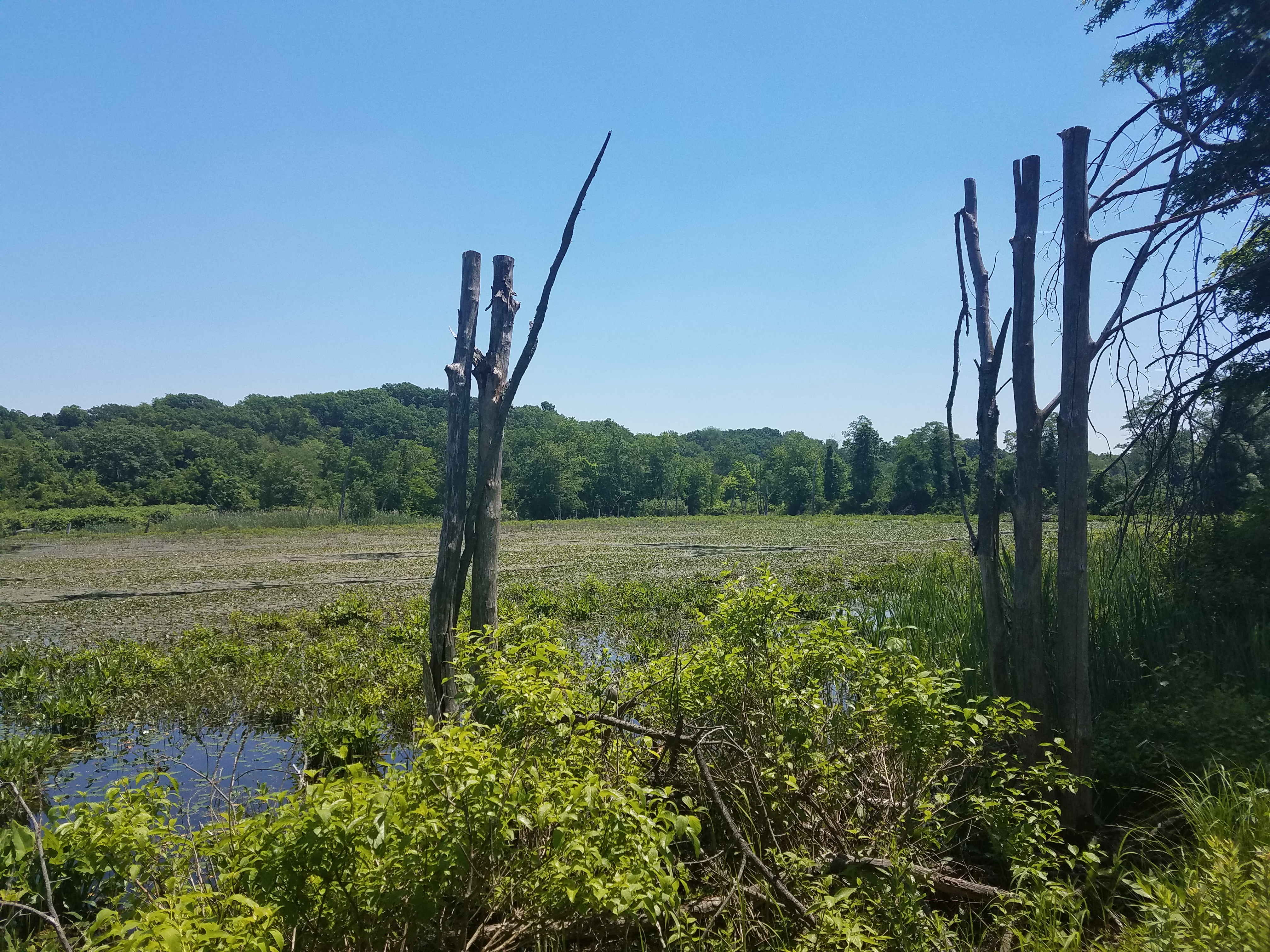 Fannie Stebbins Wildlife Refuge