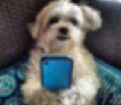 dog_contactus.jpg