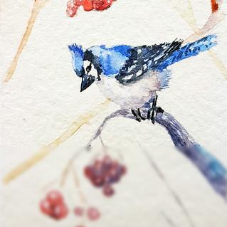 Blue Jay Painting ACEO Original Art Bird Watercolor Small Artwork