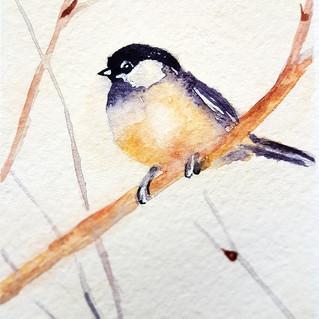 Chickadee Painting ACEO Original Art Bird Watercolor Small Artwork