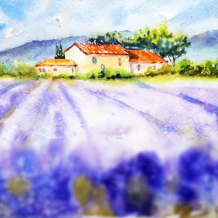 Tuscany Painting Lavender Original Art Farm Landscape Watercolor Small Artwork