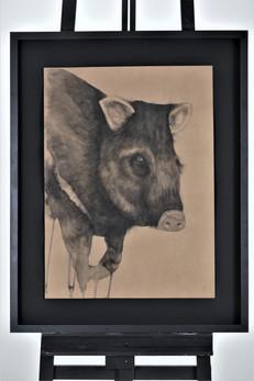 Nome: Ronaldo Diniz Título: Porco-do-mato  Pecari tajacu (Linnaeus, 1758) Técnica: Nanquim sobre papel craft 300g Dimensão: 48x66cm Ano: 2019