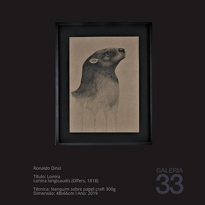 Título: Lontra Lontra longicaudis (Olfers, 1818)