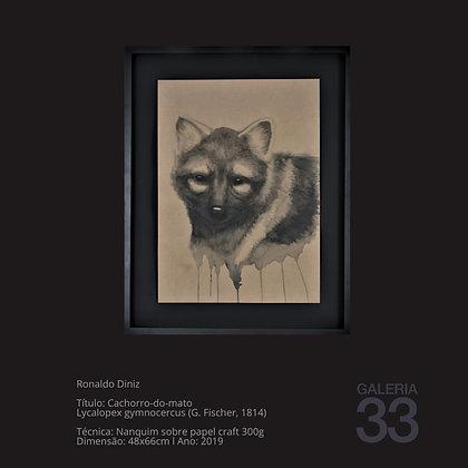 Título: Cachorro-do-mato Lycalopex gymnocercus (G. Fischer, 1814)
