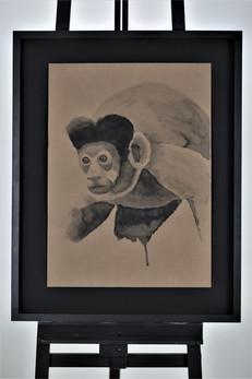 Nome: Ronaldo Diniz Título: Macaco-prego  Cebus nigritus (Goldfuss, 1809) Técnica: Nanquim sobre papel craft 300g Dimensão: 48x66cm Ano: 2019