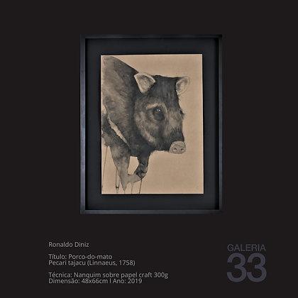 Título: Porco-do-mato Pecari tajacu (Linnaeus, 1758)