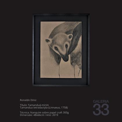 Título: Tamanduá-mirim Tamandua tetradactyla (Linnaeus, 1758)