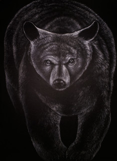 Urso Negro, 2015